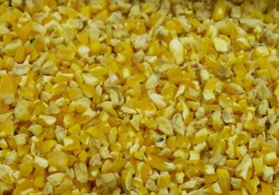 Modesto Milling Provides Organic-Certified Feed and