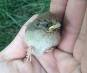 a baby wild bird