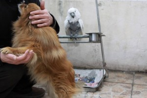 The parrot dislike the dog and the owner decide to buy another parrot to be its new companion