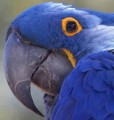 The parrot's beak is peeling - flaking