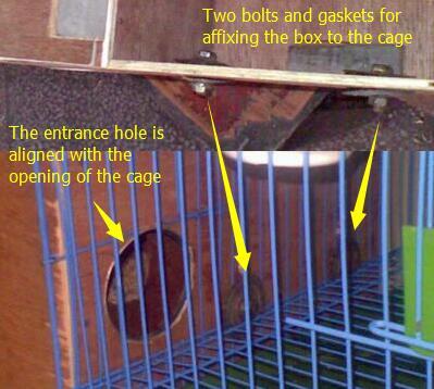 parrot breeding box design