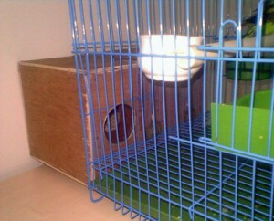 the bird cage with a breeding box