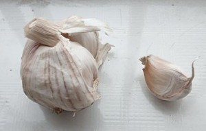The garlic used to handle the bird who got a cold